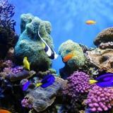 Particolare subacqueo della Barriera Corallina