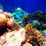 Particolare dei coralli della Barriera Corallina