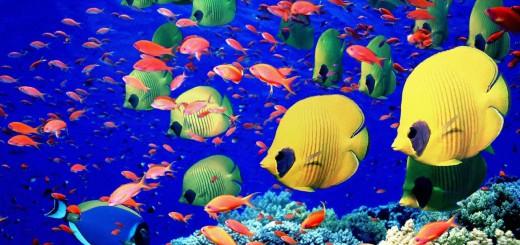 Mar Rosso: Barriera Corallina